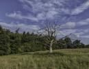 Dead tree by BillRookery