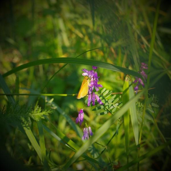 Meadow Delight by PentaxBro