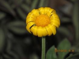ck-flower