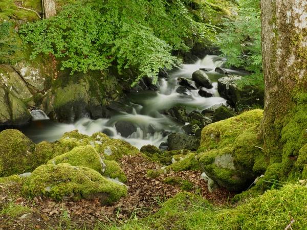 Snowdonia River by johnhiggins