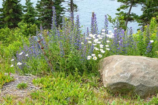 Wild Flowers by Joline