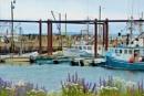 Ingall's Head Harbor by Joline
