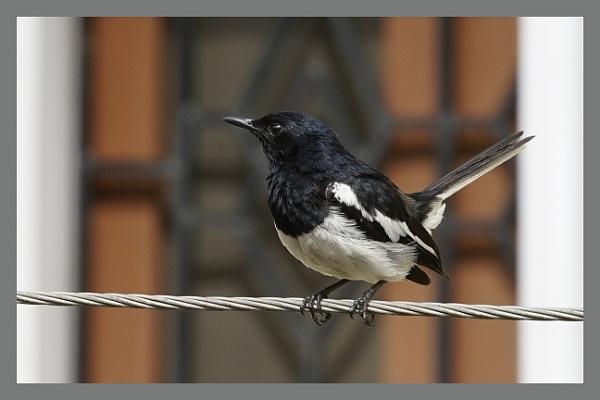 Black Bird by prabhusinha