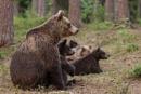 Aware European Brown Bears by rontear
