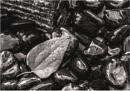 Leaf on wet stones by saltireblue