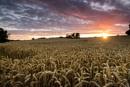 Harvest Sunset by julesm