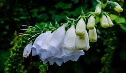 Floral display