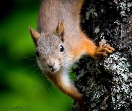 Squirrel close ups.