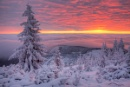 Purple Haze by zimen