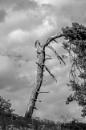 Tree by mommablue