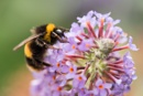 Busy Bee by Trevhas