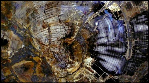 petrified wood by FabioKeiner