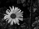Flower by AlanJ