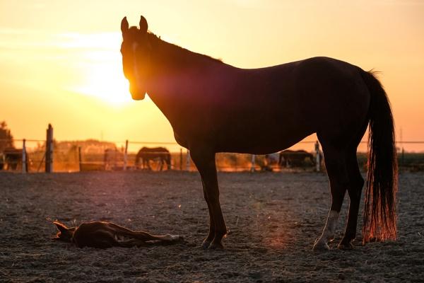 Horses Delight by Drummerdelight