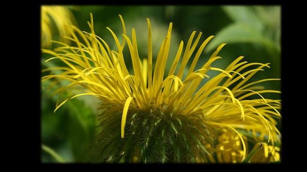 Flowers from Arley by IreneClarke