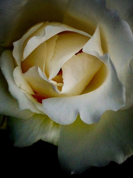 White by WilliamEdward