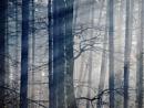 misty trees by LaoCe