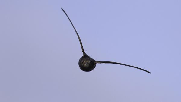 Swift Head-on! :-) by SocksAndStuff