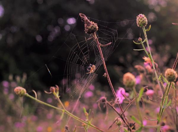 Basking Spider Glory by PentaxBro