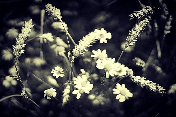 In the fields by Sony2