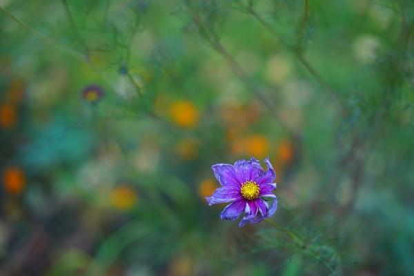 Lovely by Sony2