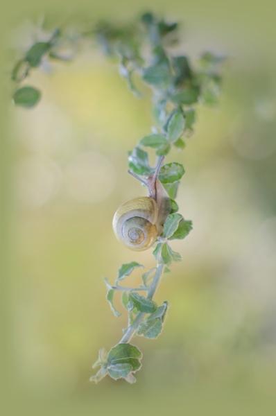 Escargot by Pascale