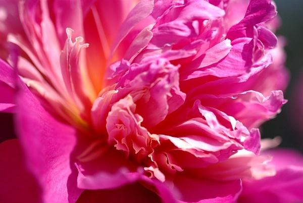 Macro Pink by KWE