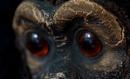 Monkey by cattyal