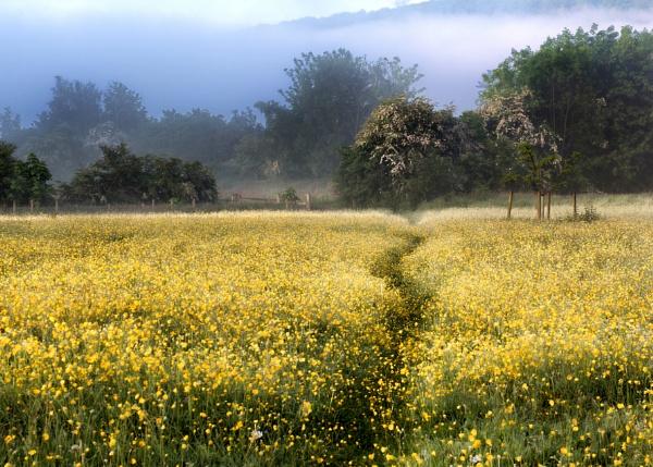 Buttercup Meadow by tywanda46