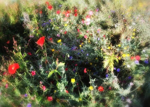 Summer Flowers by tywanda46