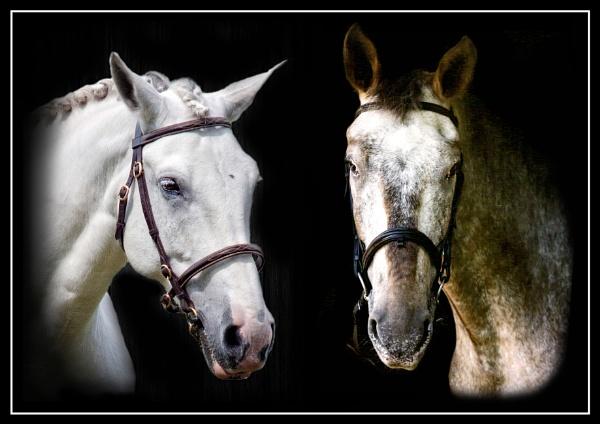 Horses by Stuart463