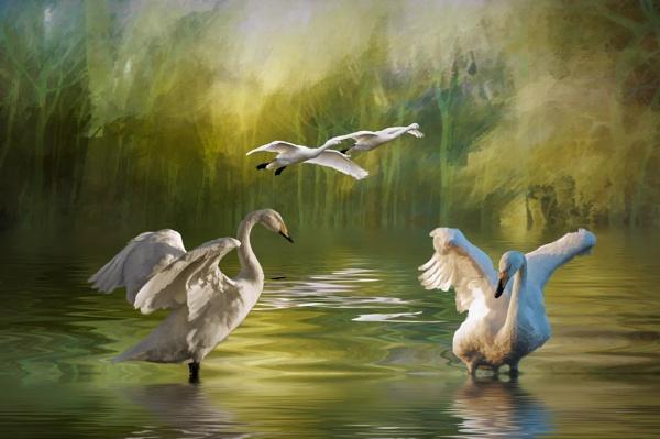 Swan Dance by Tarrby