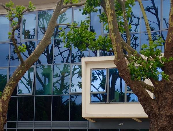 Window Trees by nclark
