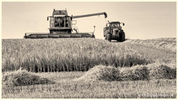 Barley Harvest by Alan_Baseley
