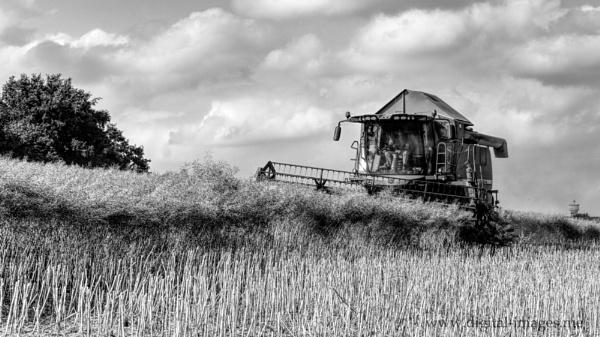 Oilseed Rape Harvest by Alan_Baseley