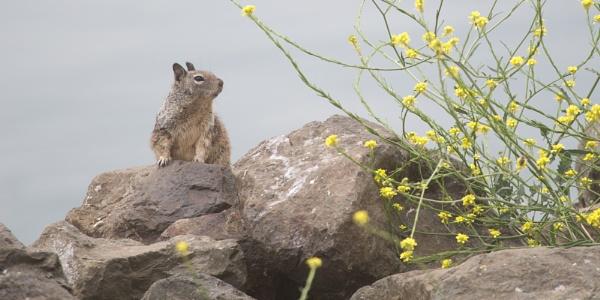 Nature Lover by sashakasha