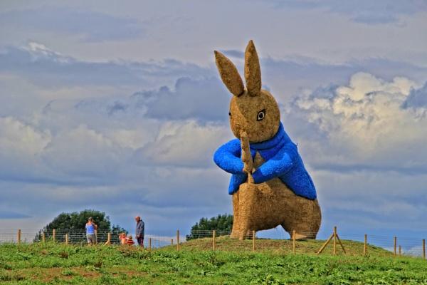big bunny by pks