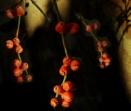 Sunlight & Berries by exposure