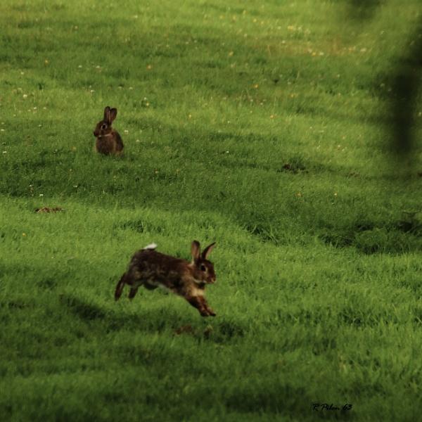 Run Forest Run by RPilon63