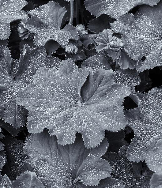 Water Droplets by NevJB
