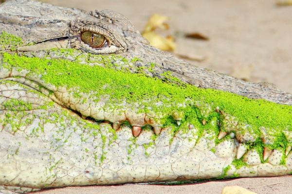 Green smile by GoranErfani