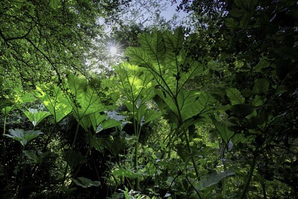 Jungle by BillRookery