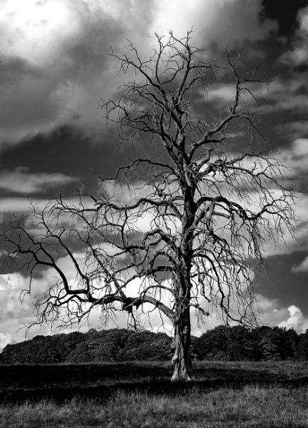 Deadwood by repooc