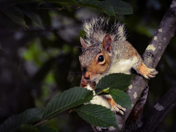 Squirrel in a tree by Alex4xd