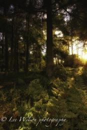 fern woodland