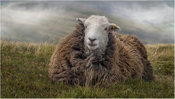 Woolly Jumper in Waiting by Leedslass1