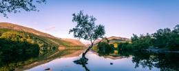 Lone Tree, Llyn Padarn