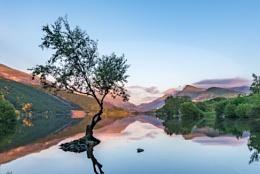 Lone Tree, Llyn Padarn II