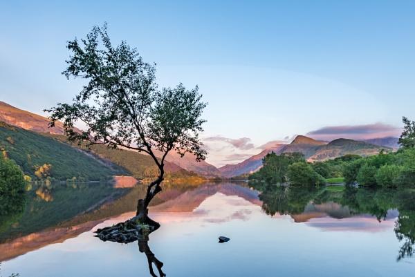 Lone Tree, Llyn Padarn II by falsecast