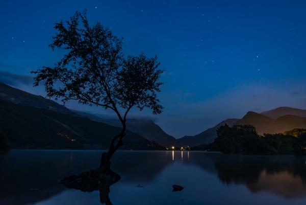 Lone Tree, Llyn Padarn III by falsecast
